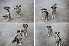 Welpen-Collage Lizenzfreie Stockfotografie