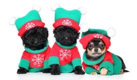 Welpen in den Weihnachtskostümen Stockfotos