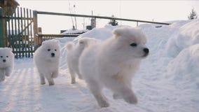 Welpen, die in den Schnee laufen
