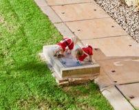 Welpen gekleidet als Sankt, die in den Garten schlendert Stockfotos