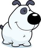 Welpen-Hund Stockfotos