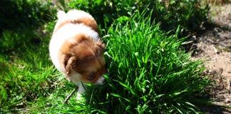 Welpen-Hund Lizenzfreie Stockbilder