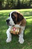 Welpen-Hund draußen im Gras Lizenzfreie Stockfotografie
