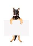 Welpen-Schäferhund, der eine Fahne hält Stockfoto
