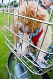 Welpenhund lizenzfreie stockbilder