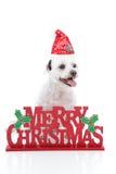 Welpenhund und Zeichen der frohen Weihnachten stockfotografie
