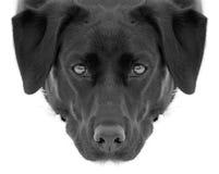 Welpenhundeaugen stockbilder