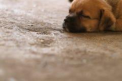 Welpenschlaf auf Schmutzbetonboden stockbild