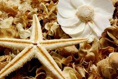 Welriekend mengsel van gedroogde bloemen en kruiden Royalty-vrije Stock Afbeeldingen
