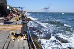 Welse corgi op de rand van zeehaven Stock Afbeelding