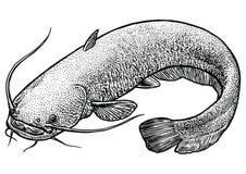 Welsfischillustration, Zeichnung, Stich, Linie Kunst, realistisch Stockbild