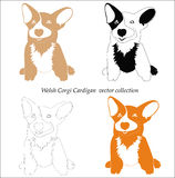 Welsh corgi cardigan collage Royalty Free Stock Photo