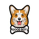 Welsh corgi dog with bone. Good boy inscription. Vector cartoon illustration. Welsh corgi dog with bone. Good boy inscription. Dog breed. Vector cartoon Royalty Free Stock Photography