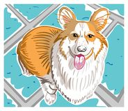Welsh Corgi Dog. Colorful illustration with hand-drawn cute and smiling white-red Pembroke Welsh Corgi dog on a blue-gray tile or carpet Stock Photos