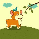 Welsh corgi dog in the meadow in yellow sky cartoon character Royalty Free Stock Images