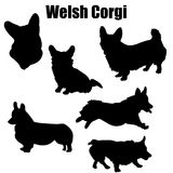 Welsh corgi dog vector icons. And silhouettes. Set of illustrations in different poses vector illustration