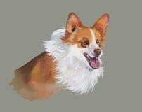 Welsh corgi pembroke Animal dog watercolor illustration  on white background Stock Images
