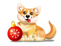 Welsh Corgi and red sphere. The lovely puppy Welsh Corgi sits and red sphere. A yellow dog a symbol 2018 new years according to the Chinese calendar. A cartoon Royalty Free Stock Image