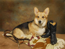 Welsh Corgi and Riding Gear Royalty Free Stock Photos