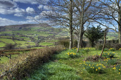 Welsh countryside garden Royalty Free Stock Images