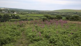 Welsh countryside from Ryers Down The Gower peninsula Wales UK with pink flowers stock footage