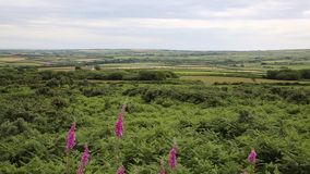 Welsh countryside from Ryers Down The Gower peninsula Wales UK with pink flowers stock video