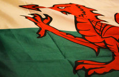 Welsh dragon Royalty Free Stock Images