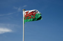 Welsh Flag Stock Photos
