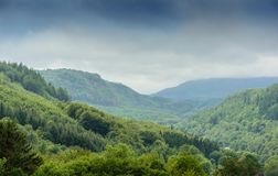 Welsh Forest Landscape with Rain Mist royalty free stock image