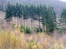 Welsh mountain landscape of trees and bushes with large stones Stock Photography