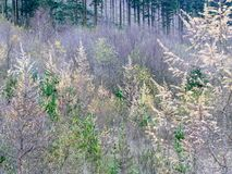 Welsh mountain landscape of trees and bushes with large stones Stock Image