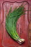 Welsh onion Stock Photography