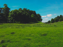 Welsh park and deers Stock Image