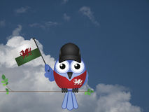 Welsh Patriot Royalty Free Stock Photos