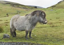 Welsh Pony 1. Welsh Pony, Black Mountains, Wales. The land where horses run free Royalty Free Stock Photos