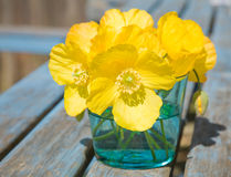Welsh poppy Stock Photo