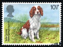 Welsh Springer Spaniel UK Postage Stamp Royalty Free Stock Photo