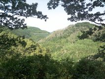 Welsh Treed Mountain Landscape Stock Images