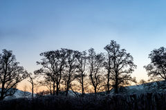 Welsh trees sunrise Royalty Free Stock Image