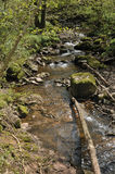 Welsh Woodland Stream Royalty Free Stock Images
