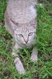 Welt der Katze Lizenzfreie Stockbilder