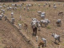 3. Welt der Kuh und des Kalbs Stockfoto
