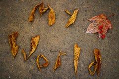 Welt dieser Herbst Lizenzfreies Stockbild