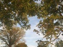 Welt von Bäumen lizenzfreie stockbilder