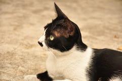 Welt von Katzen Stockfoto