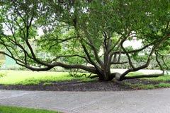 Weltlicher Baum Lizenzfreie Stockbilder