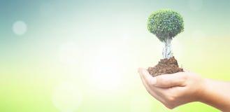 Weltumwelttagkonzept: Menschliche Hände, die großen Baum über grünem Waldhintergrund halten stockfotografie