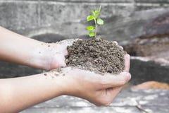 Weltumwelttagkonzept: Menschliche Hand, die kleinen Baum über unscharfer Weltkarte des Wolkenhintergrundes hält lizenzfreies stockfoto