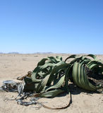 Welwitchia Anlage, Namibia stockbild