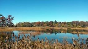 Welwyn prezerwy okręgu administracyjnego park Long Island, Nowy Youk zdjęcie royalty free
